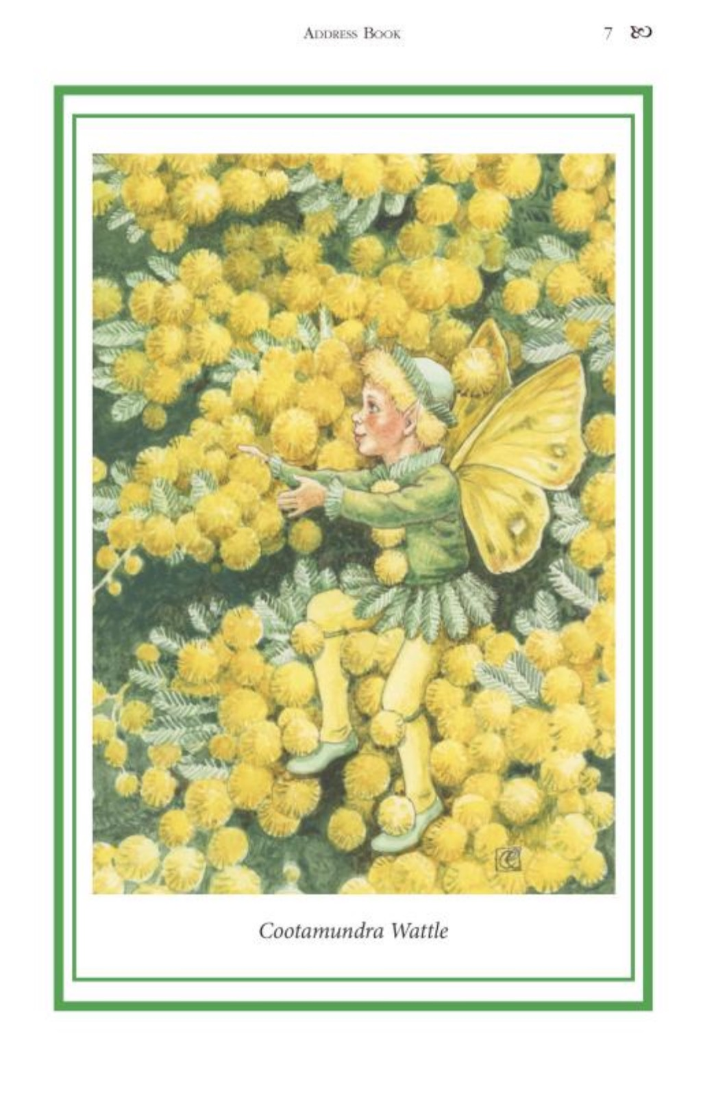 Elizabeth Alger Margaret Thornton Australian Flower Fairies Address Book Wattle Fairy