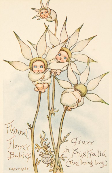 May Gibbs Flannel Flower babies