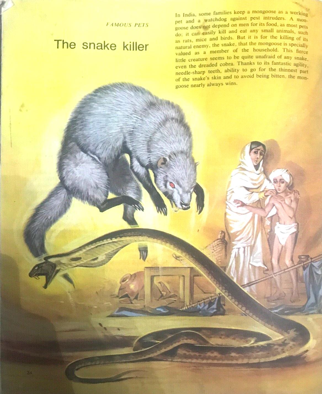 Finding Out 14 8 McBride Pets Snake Killer