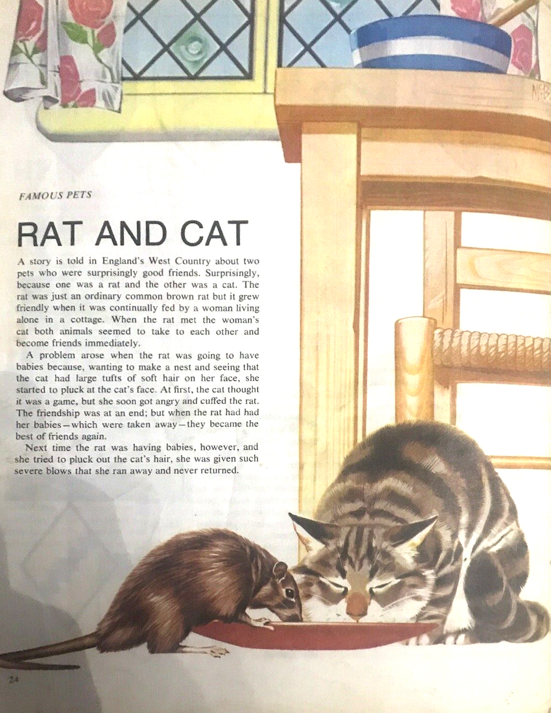 Finding Out 15 4 McBride Pets Rat and Cat