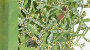 secret garden Hestia Header Image